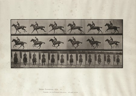 EADWEARD MUYBRIDGE (1830 - 1904) Animal Locomotion Plate n° 631 1887 Calotipo...
