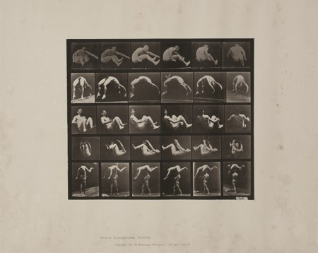 EADWEARD MUYBRIDGE (1830 - 1904) Animal Locomotion Plate n° 522 1887 Calotipo...